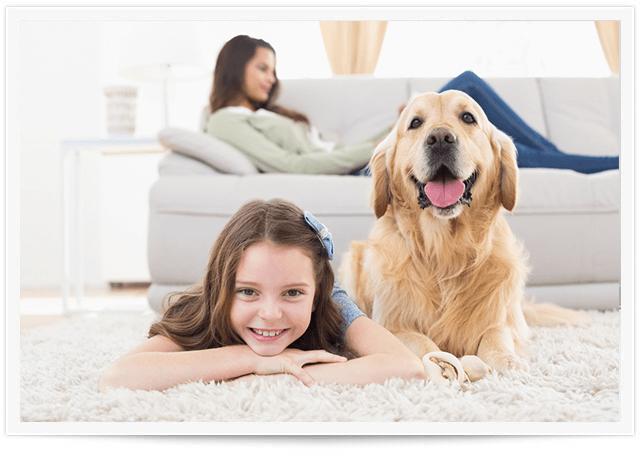 pet odor removal kansas city