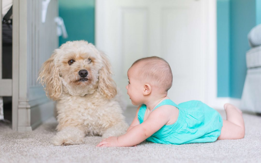 lee's summit carpet cleaning