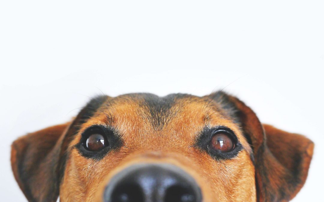 pet urine cleaning leawood