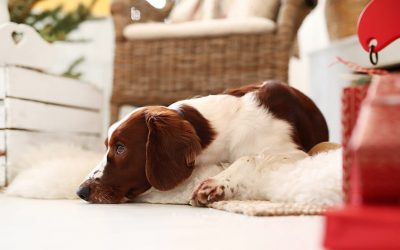Pet Stain Removal: How Do You Get Dog Poop Out of Your Carpet?