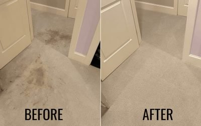Top 4 Reasons Why Hiring a Professional Carpet Cleaner is The Best Option